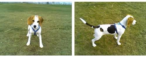 beagle-lizzy