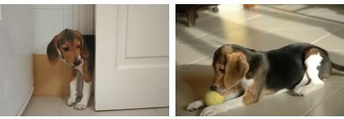beagle-proa-canarias-1