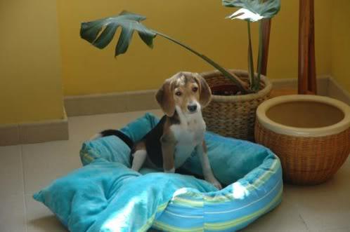 beagle-proa-canarias-3