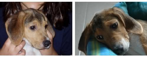 beagle-proa-canarias-6