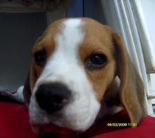 beagle-sol-argentina-3