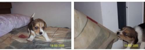 beagle-teo-donostia-5