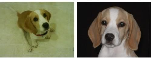 cachorro-beagle-limon