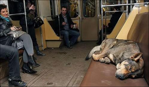 perro viaja en el metro