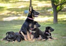 trakr-cachorros-clonados