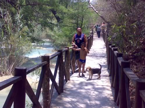 beagle-asoka-mexico-3