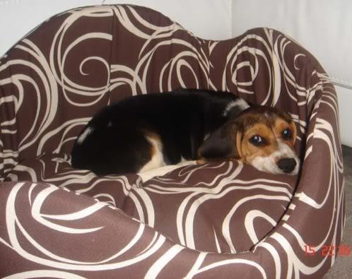 cachorro de beagle en su canasto