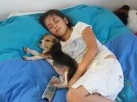 los beagles y los niños