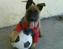 negra-cachorra-labrador