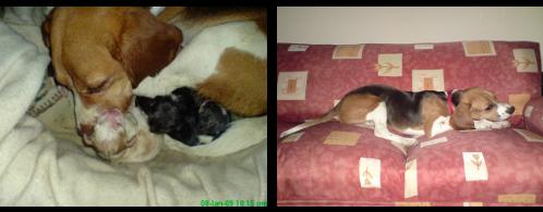 Cachorros y Luka en el sofá
