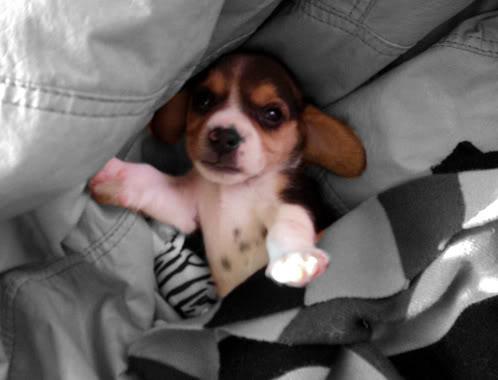 beagle-felipe-uruguay-1