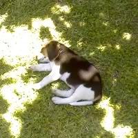 beagle-mora-argentina-2