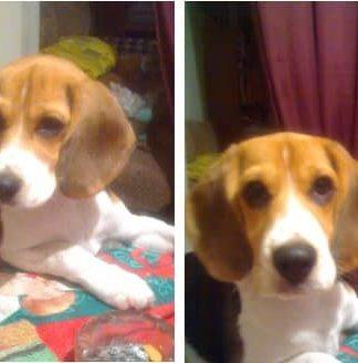 beagle-mora-argentina