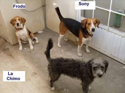sony-frodo-la_chimo