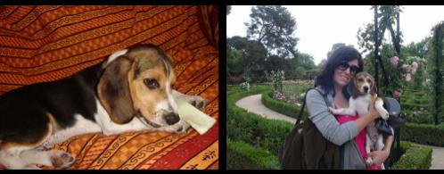 beagle-nora-almeria-1