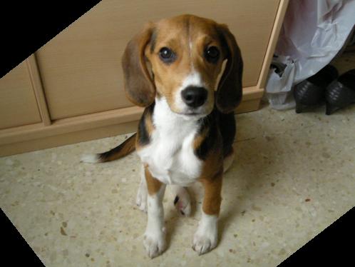 beagle-duna-las_palmas