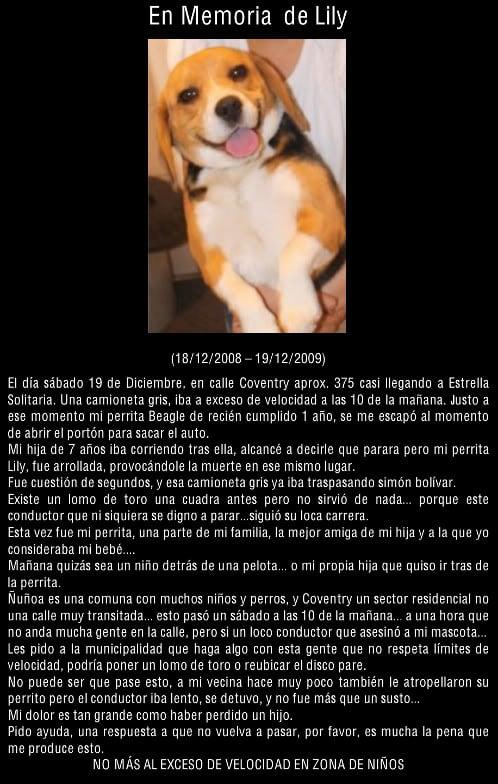 memoria-beagle-lily