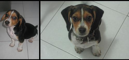 adopcion-perrita-cocoa-2
