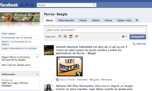 pagina-facebook-perros-beagle