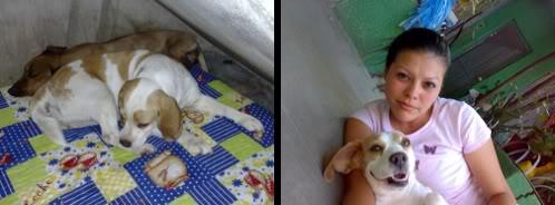 beagle-bicolor-kira-chiapas-2
