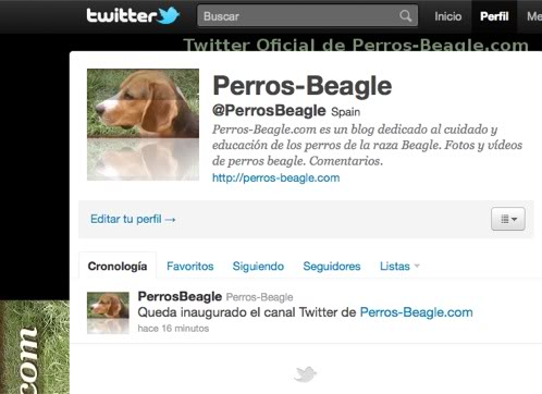 cuenta-twitter-perrosbeagle