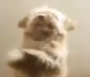 perrito-baila-salsa