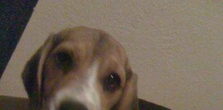 cachorrita-adopcion-mexico