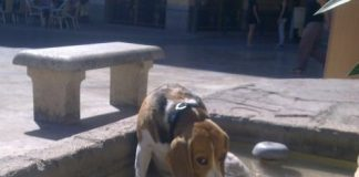 beagle-Trasto-Valencia