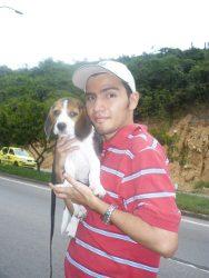 Dumax-cachorro-beagle-Bucaramanga_Colombia