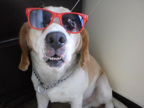 beagle-Body-Lima-Peru