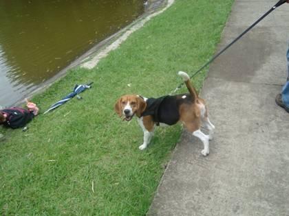 beagle-Malakias-orilla