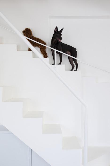 perfil-escalera-perritos