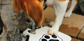 beagle-bebiendo-en-doggiefountain