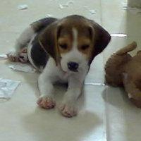 cachorro-Tony-2meses