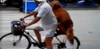 perro-viajando-en-bici
