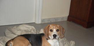 Darwin-perro-en-adopcion