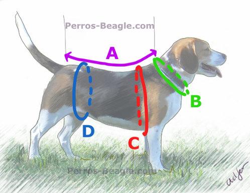 medir talla en perros para comprarles ropa