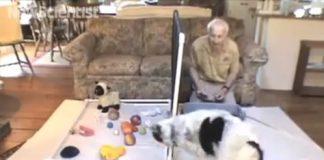 perro-identificando-objetos-por-nombre