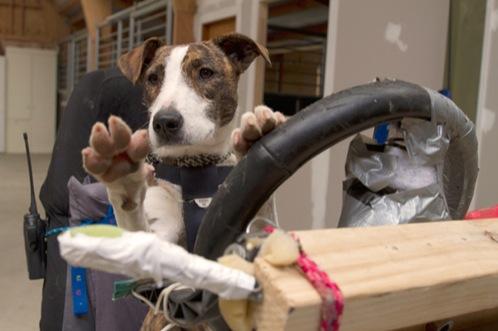 perros-aprenden-a-conducir