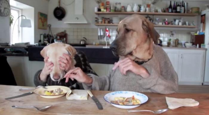 video-perros-comiendo-en-la-mesa