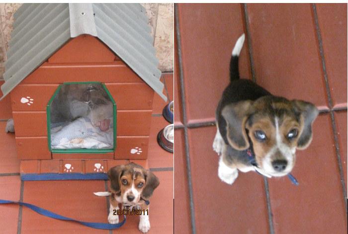 cachorro-Tony-sentado-patio
