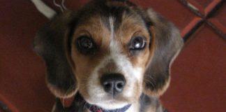 mirada-cachorro-Tony-Colombia