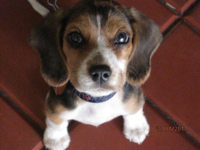 mirada cachorro Tony Colombia