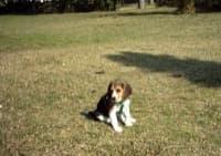 soltando al beagle parque