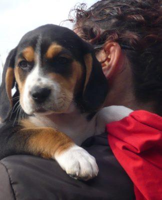 cachorro-Max-a-hombros