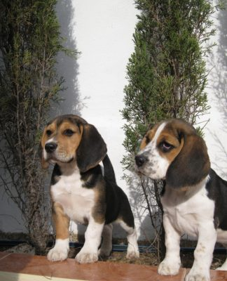 cachorros-Luna-Bosco-jardin