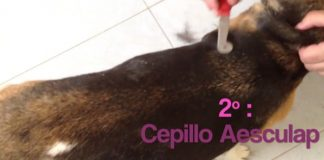 video-cepillado-beagle-aesculap-VH321R