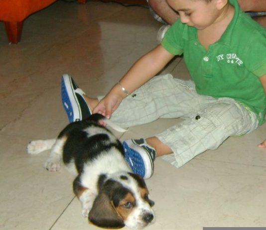 Beagle-Lukas-juega-con-niño