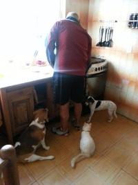 Laisha-Kira-Lucy-esperando-comida