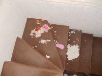 destrozos de perros en la escalera